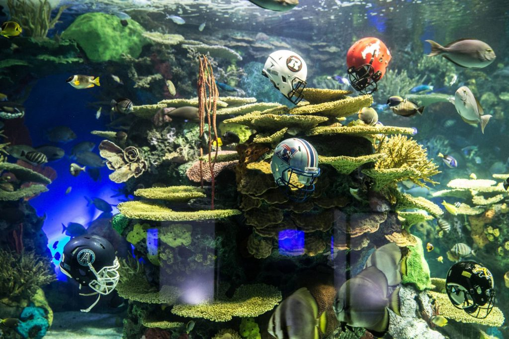Football helmets submerged in tanks around aquarium