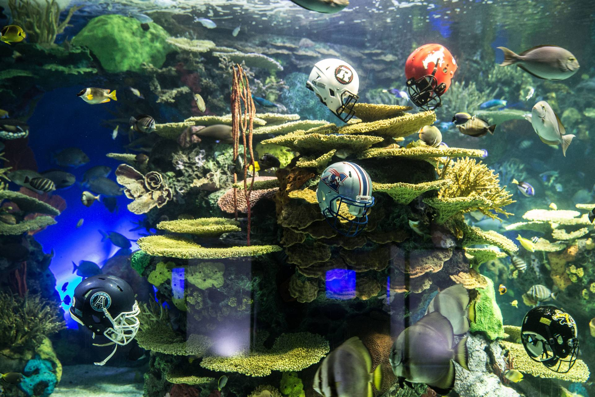 Football helmets submerged in tanks around aquarium