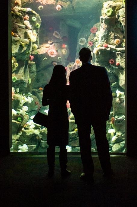 under-the-sea-an-evening-at-ripleys-aquarium-03